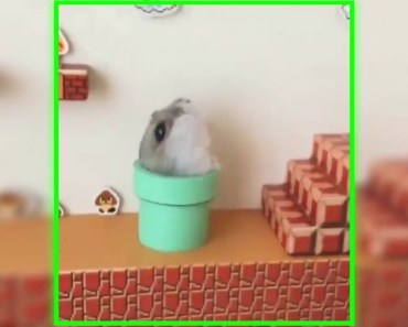 Funny Super Pet mario - funny super pet mario