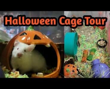Halloween Hamster Bin Cage Tour - halloween hamster bin cage tour