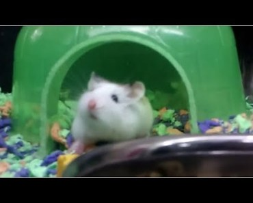 Hamster.exe has stopped working... - hamster exe has stopped working