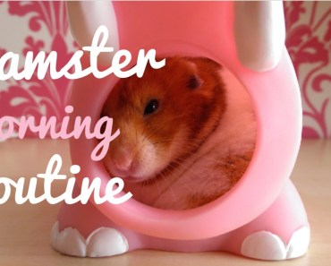 Hamster Morning routine + How to Care for your hamster during the day   Malica Hamilton - hamster morning routine how to care for your hamster during the day malica hamilton