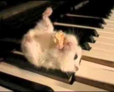 Hamster On A Piano Eating Popcorn (Cruelty Free Version) - hamster on a piano eating popcorn cruelty free version