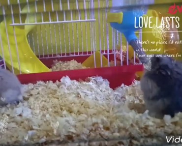 Hamster update New Cage India Ep.2 hindi - hamster update new cage india ep 2 hindi