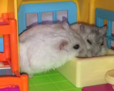 Happy Hamsters and their Hamillion-dollar Hamansion! :p - happy hamsters and their hamillion dollar hamansion p