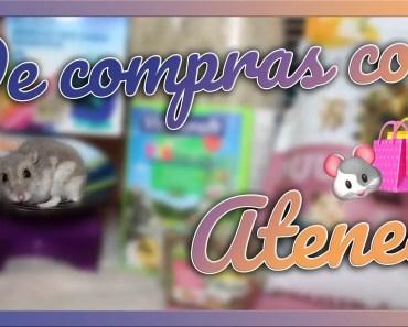 HAUL de HAMSTER | Juguetes, comida, lecho y golosinas - haul de hamster juguetes comida lecho y golosinas