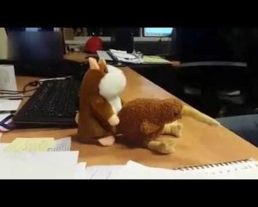 Horny Mr Hamster and shy Kiwi - horny mr hamster and shy kiwi