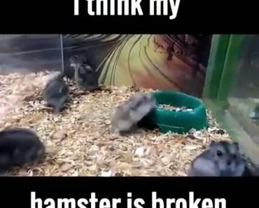 I Think My Hamster Is Broken - i think my hamster is broken