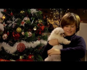 Kids and Adults Reactions to Puppy Surprise on Christmas Compilation 2017 [CUTE] - kids and adults reactions to puppy surprise on christmas compilation 2017 cute