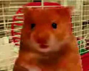 My name is harry the hamster - my name is harry the hamster