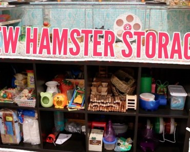 NEW HAMSTER STORAGE   setting up ikea kallax! - new hamster storage setting up ikea
