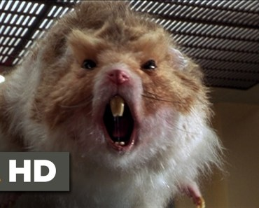 Nutty Professor 2: The Klumps (8/9) Movie CLIP - Giant Hamster Attack (2000) HD - nutty professor 2 the klumps 89 movie clip giant hamster attack 2000 hd