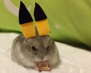 Pikachu Hamster? Cute & Funny Hamster Dress-Up   wukong_qq - pikachu hamster cute funny hamster dress up wukong qq