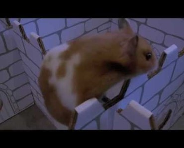 Probably The Best Hamster Prison Escape Movie of all Time !!! - probably the best hamster prison escape movie of all time