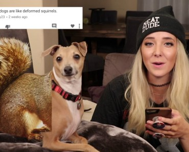 Reading Mean Comments About My Dogs - reading mean comments about my dogs