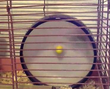 Robo Hamster wheel flip - robo hamster wheel flip