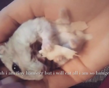 See what happen when HAMSTER get HUNGRY..????? - see what happen when hamster get hungry