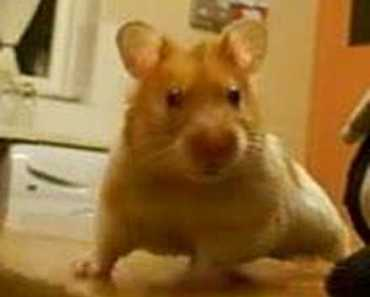 "sexy harry the hamster crazy happy birthday video ""SWEARING"" - sexy harry the hamster crazy happy birthday video swearing"