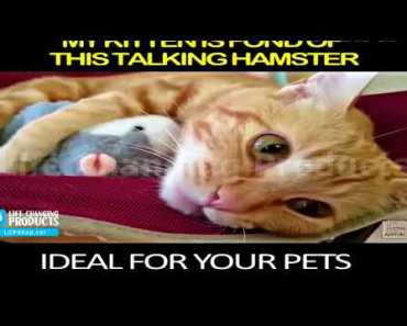 Talking Hamster - Funny Toy That Mimics What You Say - talking hamster funny toy that mimics what you say