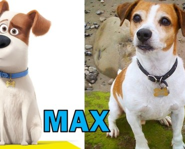 The Secret Life Of Pets REAL LIFE All Characters #VirtualRealStars - the secret life of pets real life all characters virtualrealstars
