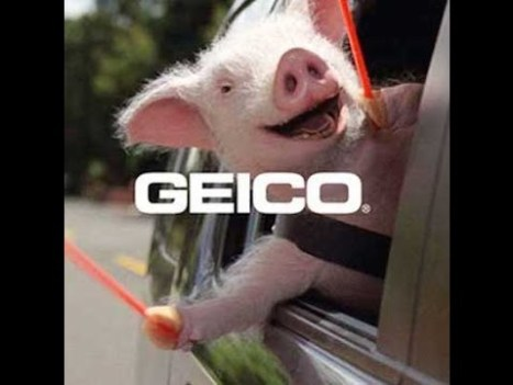 Top 13 The Best and Funny Geico Maxwell the Pig Insurance TV