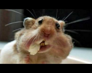 TRY TO HOLD YOUR LAUGH CHALLENGE - Super funny ANIMAL videos! - try to hold your laugh challenge super funny animal videos