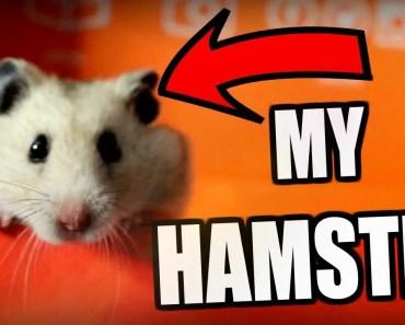UNBOXING with MY HAMSTER - unboxing with my hamster