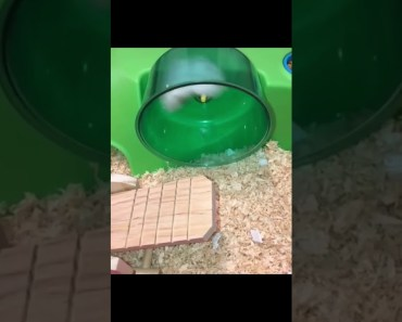 Very funny hamster flying - very funny hamster flying