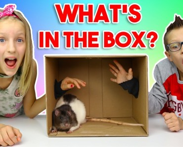 What's in the BOX Challenge!!!!!! - whats in the box challenge