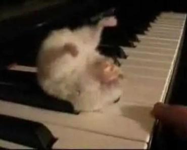 Funny Hamster - 1510196624 funny hamster