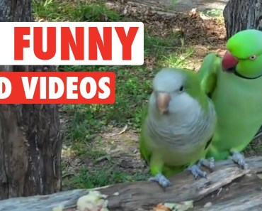 19 Funny Bird Videos || Awesome Compilation - 19 funny bird videos awesome compilation