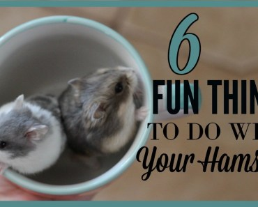6 FUN THINGS TO DO W/ YOUR HAMSTER! - 6 fun things to do w your hamster