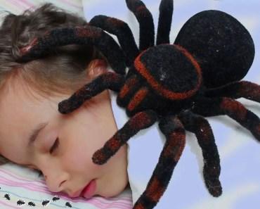 ATAQUE DA ARANHA GIGANTE Funny KIDS & GIANT SPIDER Johny Johny Yes Papa Nursery Rhymes Song - ataque da aranha gigante funny kids giant spider johny johny yes papa nursery rhymes song