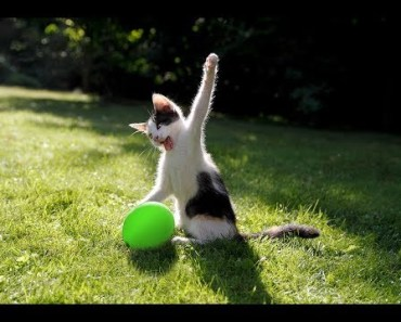 Cat vs Balloon - Funny Cats Playing With Balloons Videos Compilation 2017 [BEST OF] - cat vs balloon funny cats playing with balloons videos compilation 2017 best of