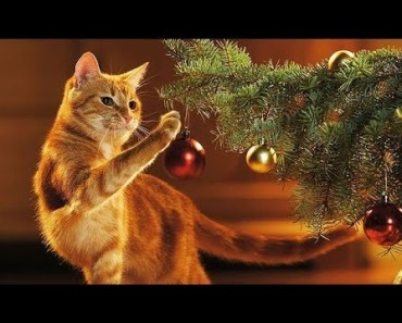 Cat vs Christmas Tree - Funny Cats Videos Compilation 2017 [CUTE] - cat vs christmas tree funny cats videos compilation 2017 cute