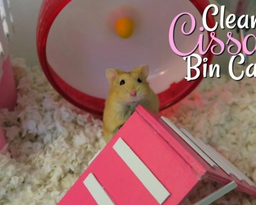 Cleaning Cissa's Hamster Bin Cage || Pink & White Cage Tour! - cleaning cissas hamster bin cage pink white cage tour