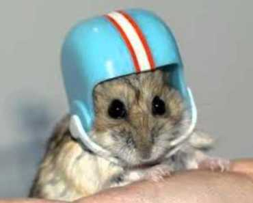 Cutegasm (Funny Hamster Pics) - cutegasm funny hamster pics