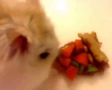 Funny hamster's first video! Episode 1 - funny hamsters first video episode 1