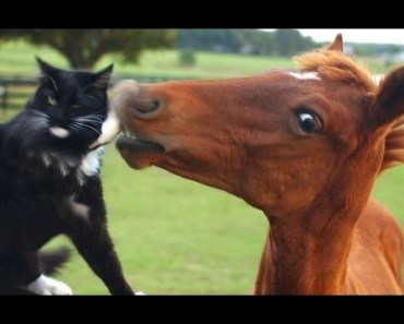Funny Horse Videos Compilation - Cute Animals - funny horse videos compilation cute animals