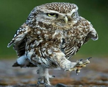 Funny Owls And Cute Owls | Best Owl Videos Compilation - funny owls and cute owls best owl videos compilation