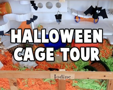 Halloween Hamster Cage Tour 2017 - halloween hamster cage tour 2017