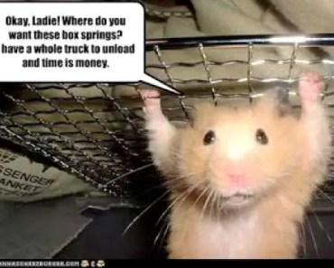hamster love - hamster love