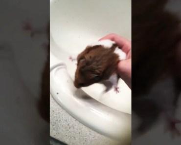 Hamsters Hate Baths - hamsters hate baths