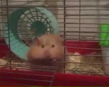 Lustige Hamster 2015 /Funny hamster 2015/Compilation - lustige hamster 2015 funny hamster 2015compilation