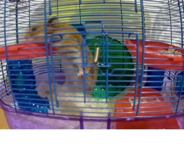 Our Crazy & Funny Hamsters - our crazy funny hamsters