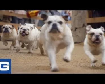 Running of the Bulldogs – GEICO - running of the bulldogs geico