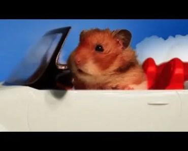 Talking Hamster Sings 'Gimme My Nuts' Music Video - talking hamster sings gimme my nuts music video