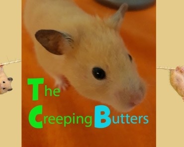 The Creeping Butters - Funny Hamsters - the creeping butters funny hamsters