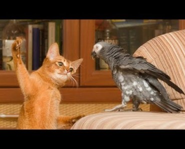 Top Funny Parrots Annoying Cats Compilation 2017 - Cute Birds - top funny parrots annoying cats compilation 2017 cute birds