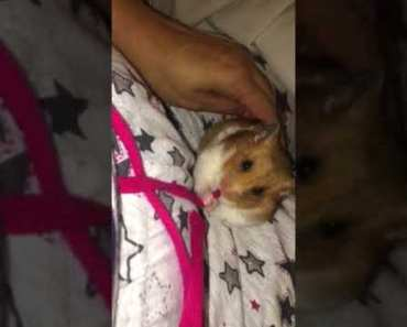 Funny hamster - 1512948541 funny hamster
