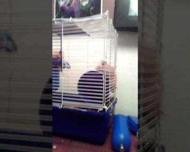 Funny hamster - 1514213637 funny hamster