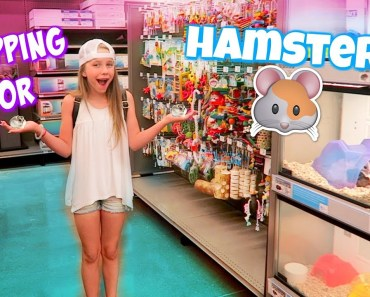 Getting 3 Hamsters! Shopping at Petco and PetSmart for Hamster Gear! - 1514420288 getting 3 hamsters shopping at petco and petsmart for hamster gear